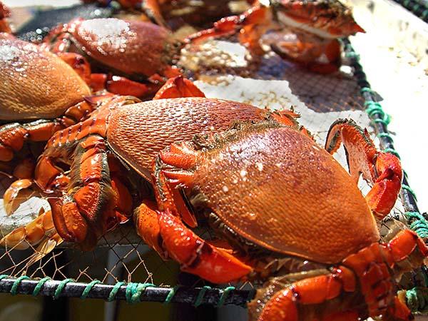 Rockliff spanner crab
